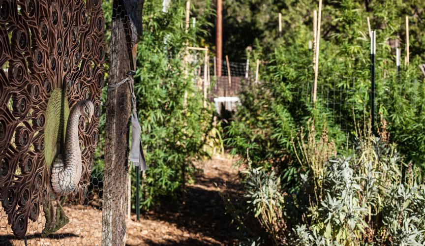 A_Medicinal_Garden_P01